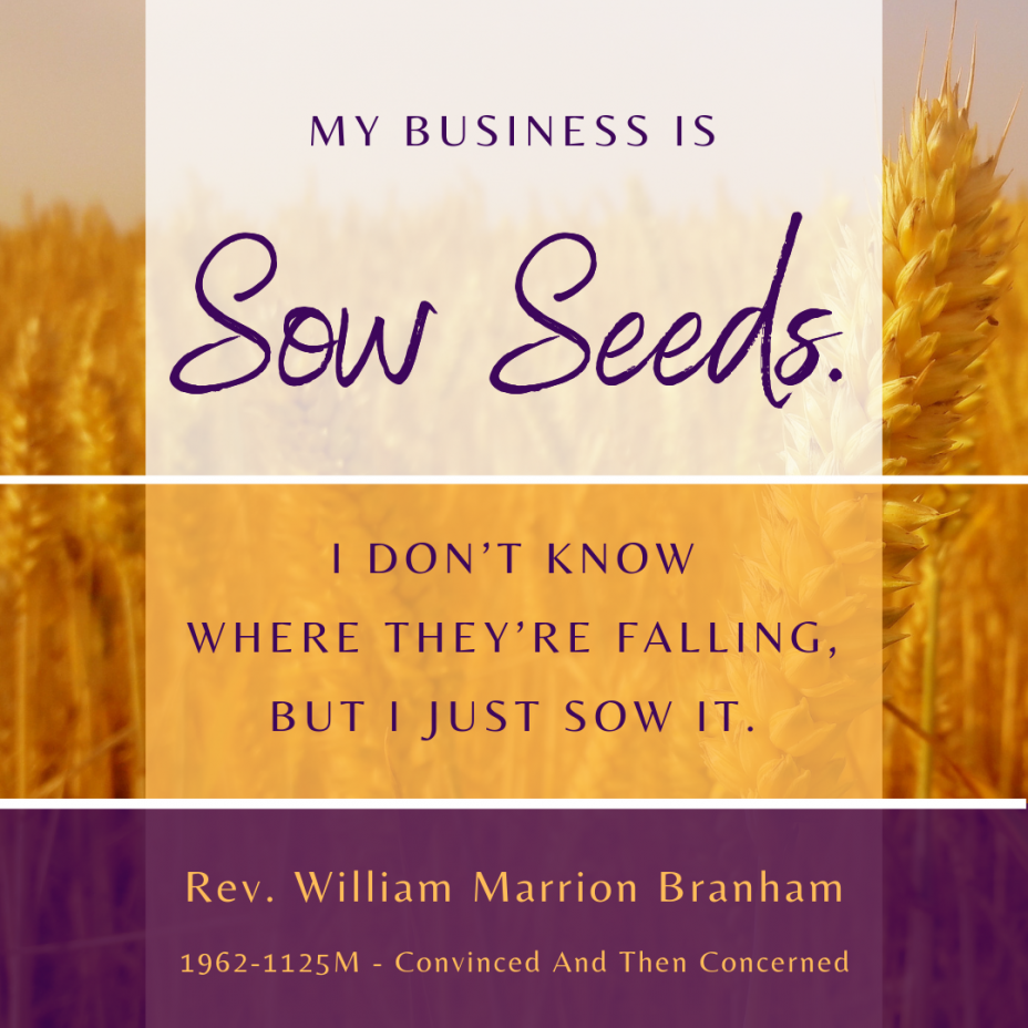Sow Seeds